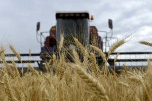 Аграрии Сумской области намолотили первый миллион тонн зерна
