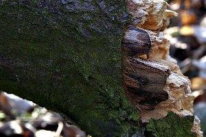 В Бурыни ребенка убило упавшим деревом