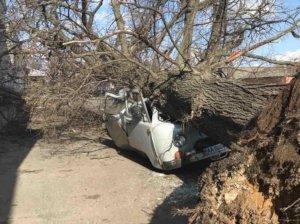 На Сумщине огромное дерево разбило машину