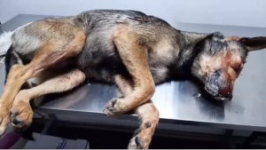 По факту издевательства над собакой полиция Сумщины начала уголовное производство