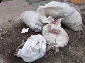 В Шостке установили личность живодера,  убившего десятки животных