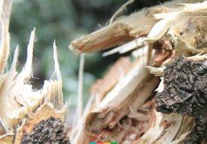 В Сумском районе поваленное шквальным ветром дерево убило женщину