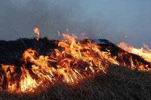 За сжигание сухой растительности — штраф