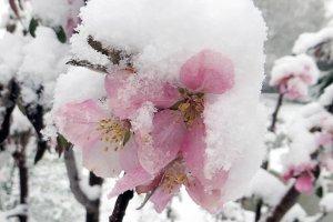 Сумчане! В конце апреля ожидается похолодание