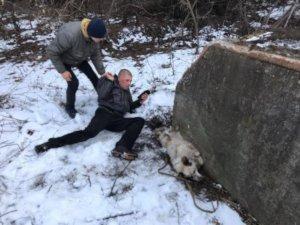 Сумчанина,  который душил собаку,  оштрафовали