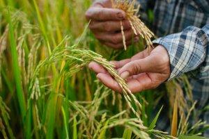 Сумские фермеры отмечают сегодня профессиональный праздник — День фермера в Украине