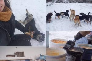 Сумской Центр передержки бездомных животных ищет волонтеров