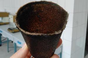 Ученые из СНАУ изобрели стаканчики для кофе из кофе