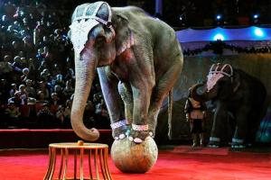 В Конотопе запретили цирки-шапито с животными