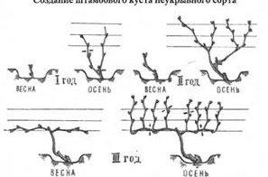 Схема простого скрещивания винограда