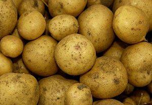 Все ли мы знаем об обычной картошке.  А слабо накопать ведро картошки с 2-3 кустов.  А к началу июня.