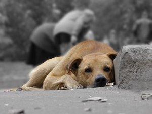 Место собачьего приюта снова рассматривают в Сумах