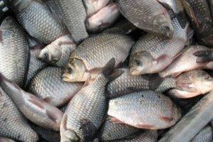 На водохранилищах Сумщины закончился нерестовый запрет на лов рыбы