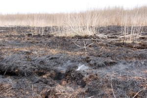 На Сумщине бушуют торфяные пожары — для тушения будет перенаправлено русло реки