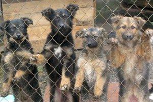 Сумчан приглашают на субботник в собачий приют